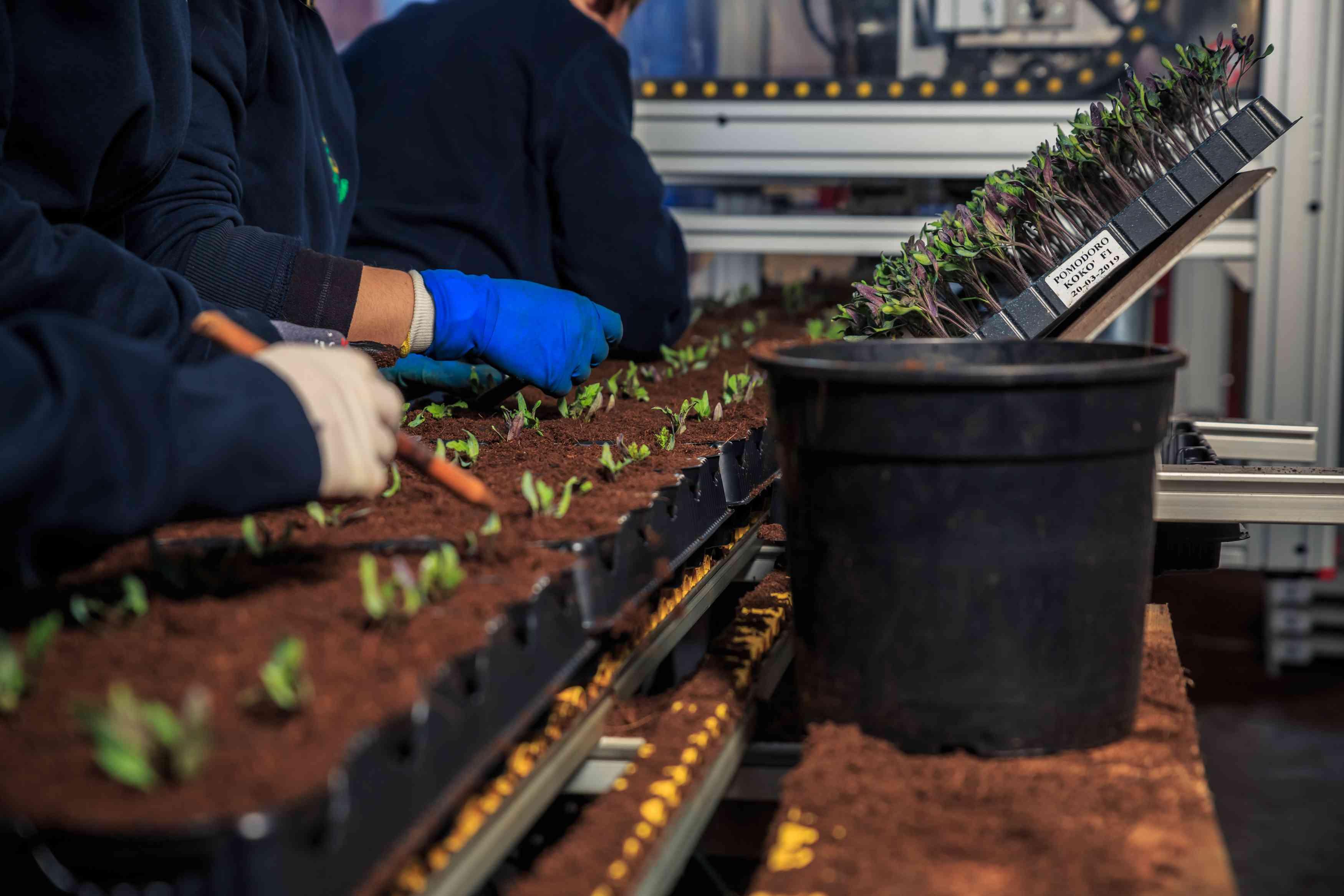 Azienda Agricola COSTANZO SAVIO E DORIANO - cella di germinazione