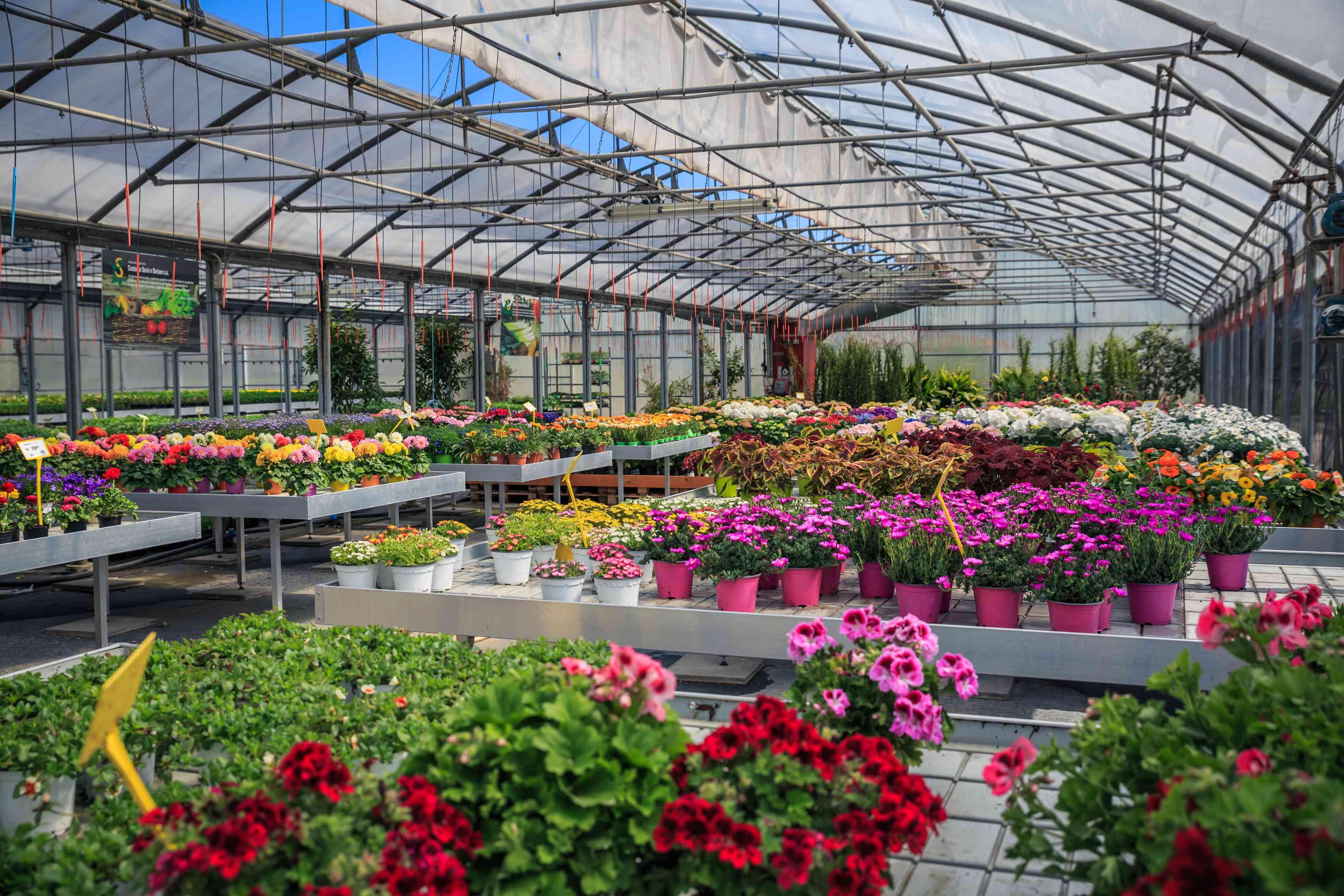 Azienda Agricola COSTANZO SAVIO E DORIANO - fiori