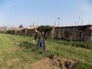 ARBORETO DELLA MEMORIA a Casale Monferrato